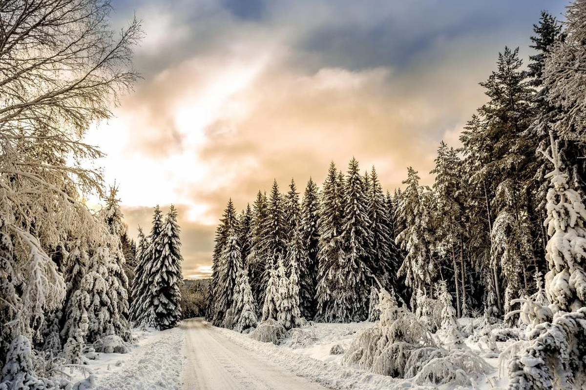 Driving in the Snow: How to Prepare for Road Conditions