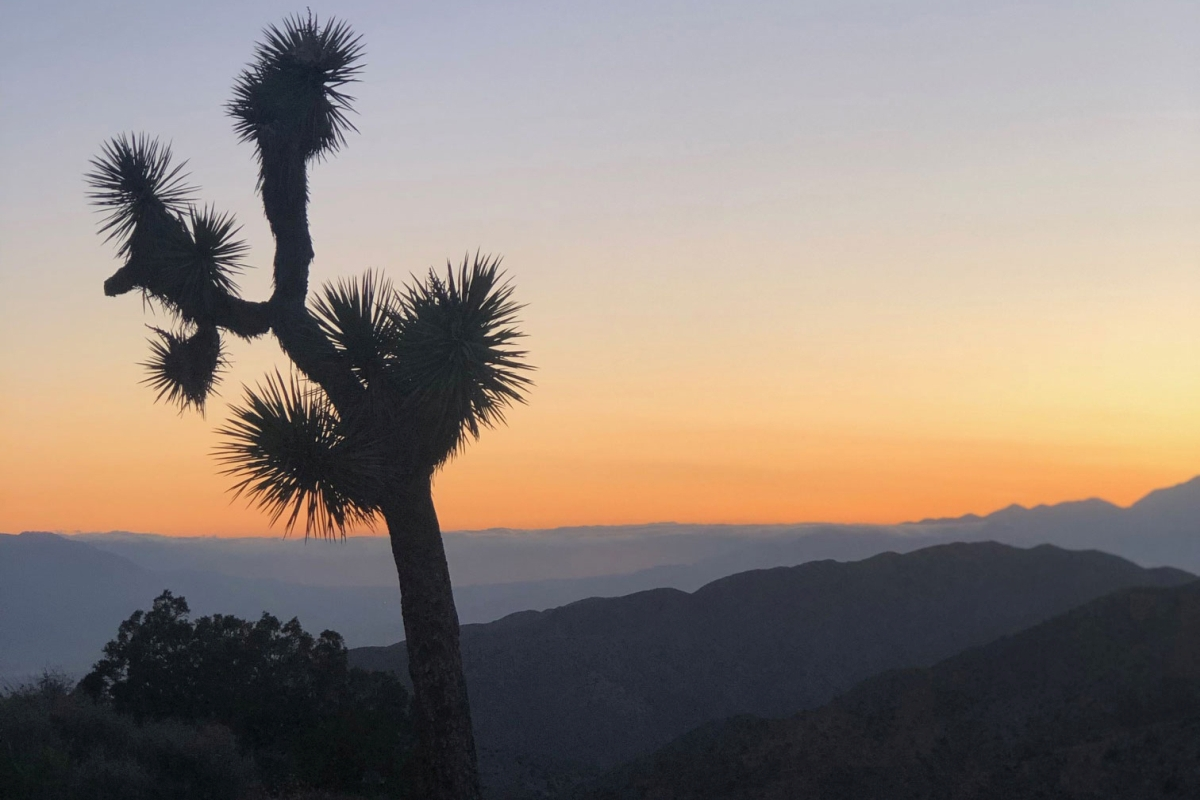 Guide for a Quick Vacation: Visiting Joshua Tree